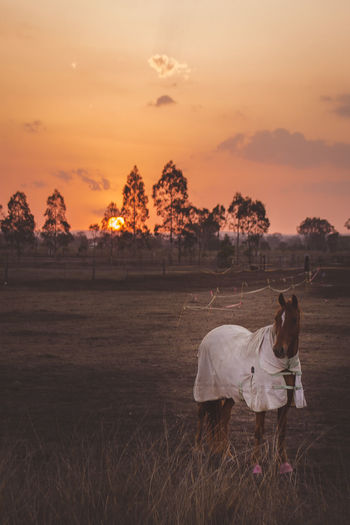 View of horse on field against sky during sunset