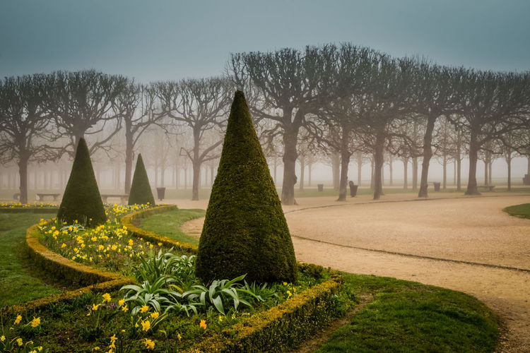 Park, Saint-Germaine-en-Laye Plant Tree Nature Grass Sky No People Growth Green Color Day Grave Topiary Cemetery Outdoors Religion Beauty In Nature Park History Tranquility Park - Man Made Space Hedge Formal Garden Europe France Spring Winter Foggy Foggy Morning Bare Tree