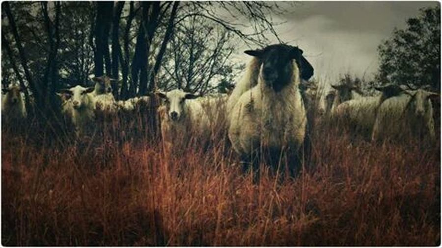 Landscape_photography Sheep@Work Wintertime Backontrack ... i can't wait to make more pics off you :-) ●•º●■◇♣