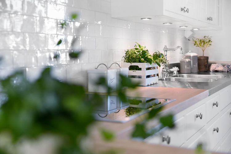 Plants in domestic kitchen at home