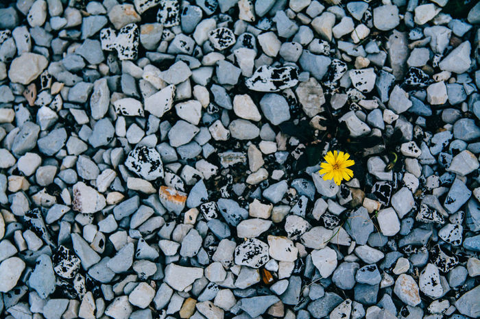 Clear Mozaik Peaces Photography Shades Of Blue Spring Stones Yellow Flower