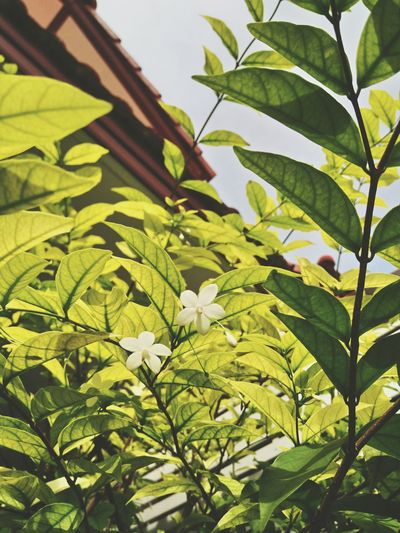 Flower Nature Leaf Leaves🌿 Green