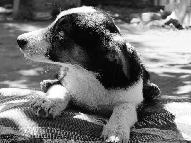 Taking Photos Hi! Hello World Open Edit Dog Love Blackandwhite Cute Animals