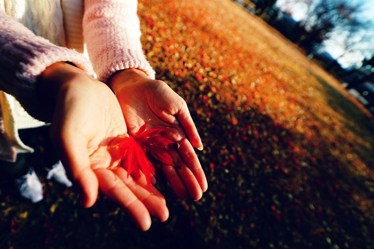 Human Hand Red Lifestyles Sunlight Outdoors Maple Leaf Close-up Human Body Part Day One Person Freshness Adults Only Adult People