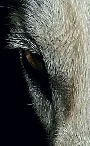 Can you guess what animal this is? The Portraitist - 2016 EyeEm AwardsTaking Photos Check This Out Hello World ForTheLoveOfPhotography Femalephotographerofthemonth Artistic Eye Animal Photography Animal_collection Tadaa CommunityEyeEm Gallery Closeup Phoneography Eyeemphotography Marco Photography My Love❤ Marco Puppy Dog❤ Eye4photography  Marco_collectionAnimalphotography No People Marco Beauty Photooftheday