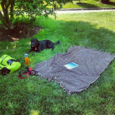 Picnic with the puppy Niceweather Lovelife Fun Sillymexican fairmount