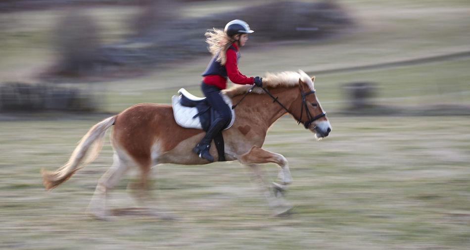 Full length of a horse running