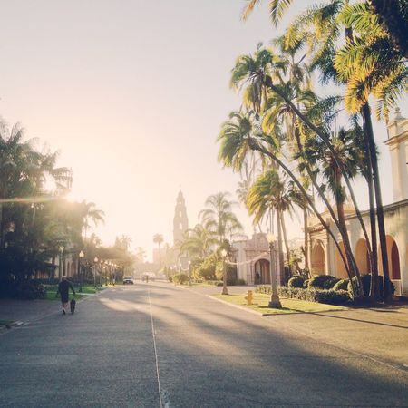 Architecture Built Structure City City Life City Street Day Diminishing Perspective Empty Footpath Growth Lifestyles Outdoors Palm Trees Road San Diego Sky Sunlight Sunshine The Way Forward Tree Treelined Vanishing Point Walkway