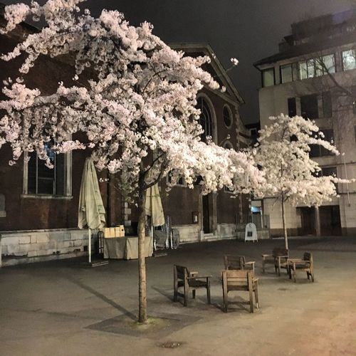 London Bow Bells Blossom Spring March