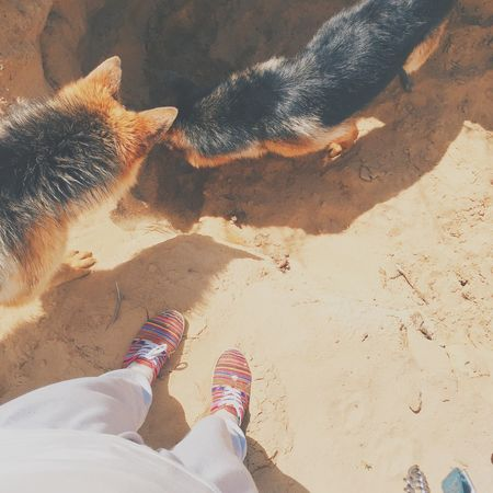 Sand Dog Dogs Feet Summer German Shepherd Hole Here