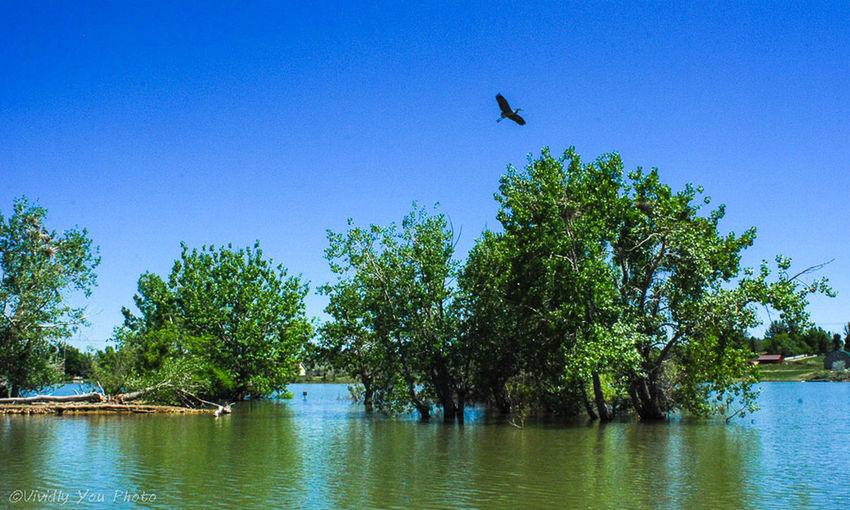 Heron.. Taking Pics Nature water Water And Sky