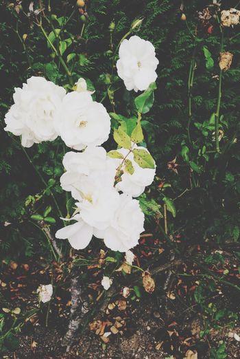 Flowers Love Hello World Enjoying Life