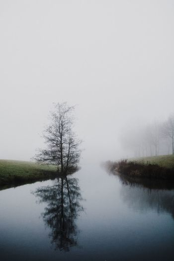Nature Water Tree Reflection Beauty In Nature Tranquil Scene Tranquility Lake No People Sky Scenics Outdoors Fog Lone Waterfront Landscape Hazy  Mist Bare Tree Day Check This Out Beautiful The Week Of Eyeem Nature_collection EyeEm Nature Lover