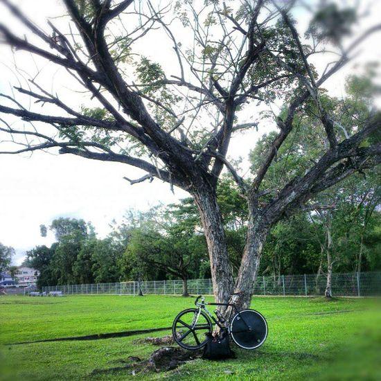 Tree Hugger. Not ! Singlespeed Fixiegram Rest fixed tree greenfield