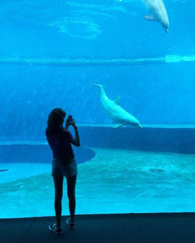 Acquarium Girl Blue Dolphins