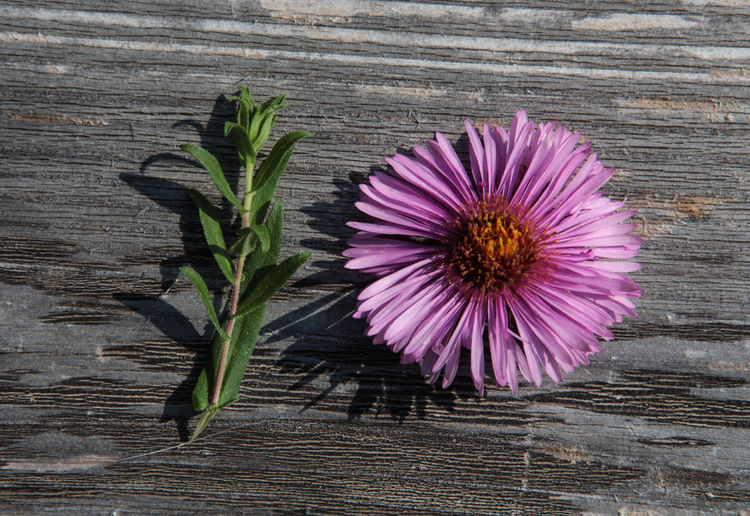 10 Textured  Beauty In Nature Close-up Directly Above Flower Flower Head Flowering Plant Fragility Freshness Growth Happy Birthday! Inflorescence Number Petal Plant Plant Part Purple Ten Vulnerability  Wood - Material