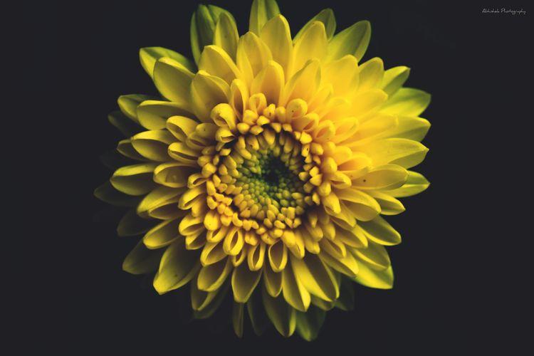 Flower 🌼 Eyem