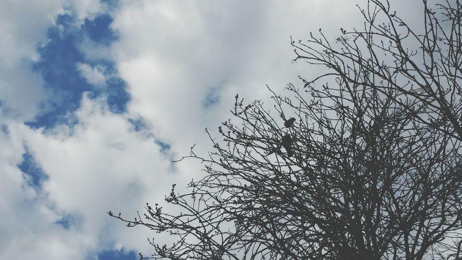 Birds Doves Birds In A Tree1