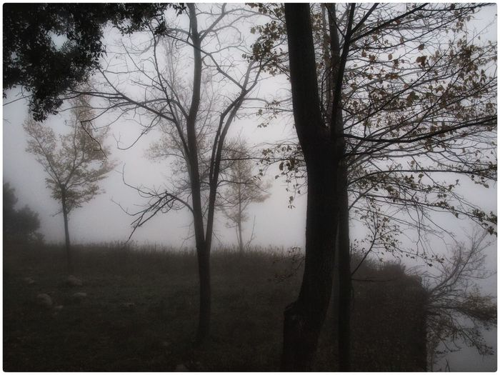 Tree Nature Tranquility No People Tranquil Scene Outdoors Landscape Scenics Fog Beauty In Nature Rain Rainy Days SPAIN Loves_spain Nature Naturelovers Montserrat Explore Discover  Kings_villages
