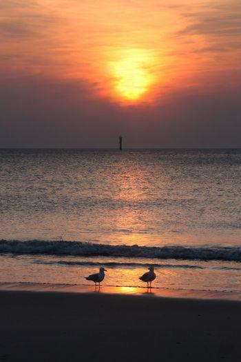 Silhouette of bird on beach during sunset