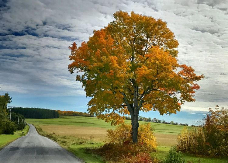 Tree on field by road against sky