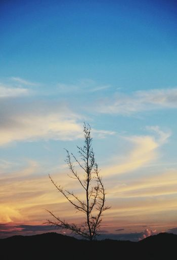 Sunset Beauty In Nature Landscape Silhouette Blue Nature Scenics Sky Outdoors Tree Bare Tree Branch No People Day EyeEm Gallery EyeEm Diversity EyeEm Best Shots EyeEm Vision EyeEm Filter Eyeem Market Eyeem Collection