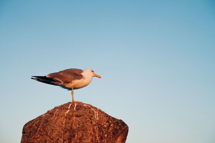 Travel Travel Photography Animal Animal Themes Animal Wildlife Animals In The Wild Bird Blue Clear Sky Copy Space Day Low Angle View Nature No People One Animal Outdoors Perching Rock Rock - Object Seagull Sky Solid Vertebrate
