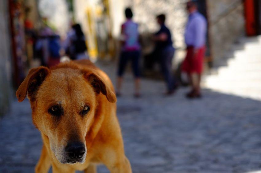 The Dog Dog Dogs Street Streetphotography Provence Les Baux De Provence Fujifilm Fujifilm_xseries Fujifilm X-E2 Fujixe2 Fujifilmxe2