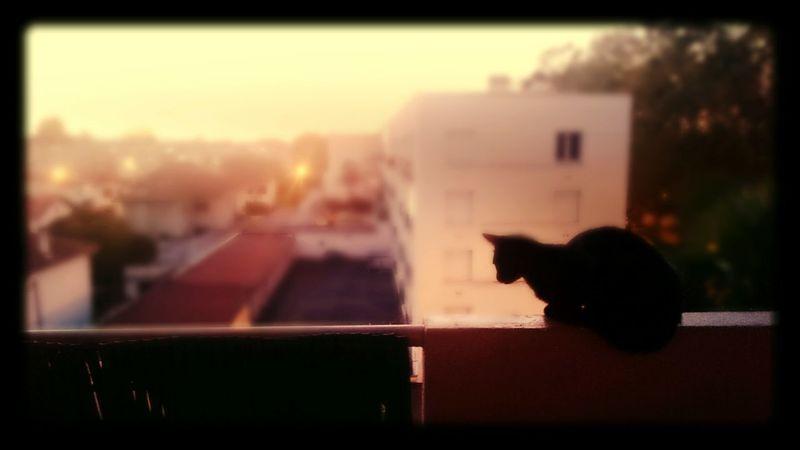 Lovingcats