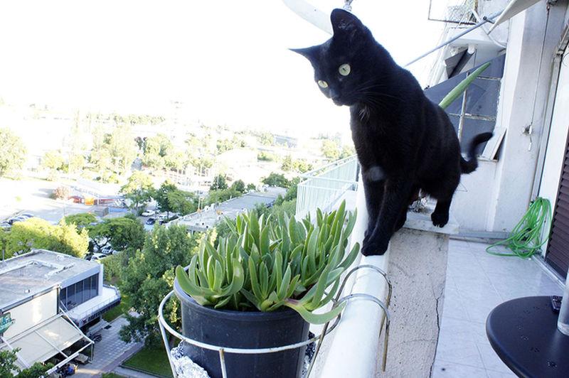 Balcony Balcony View Black Cat Cat Day One Animal