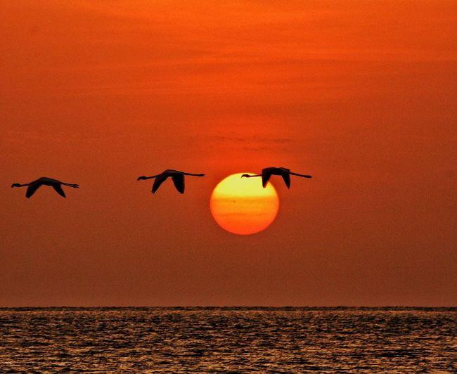 Silhouette Birds Flying Over Sea Against Orange Sky