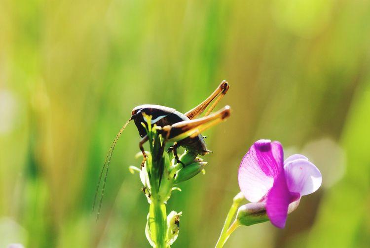 Close-up of grasshopper on flower