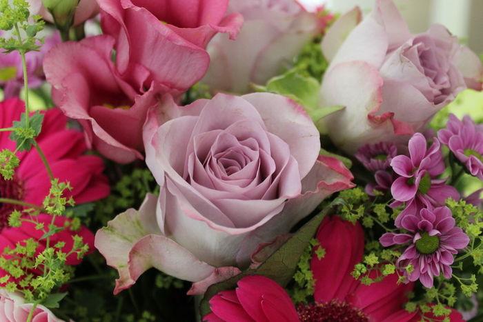 Flower Rose♥ La Vie En Rose Pink Rose