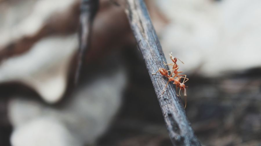 Insect Animal Themes Close-up One Animal Nature Animals In The Wild Outdoors Animal Wildlife Animal Behavior Beauty In Nature Day No People Ants At Work EyeEmNewHere Live For The Story