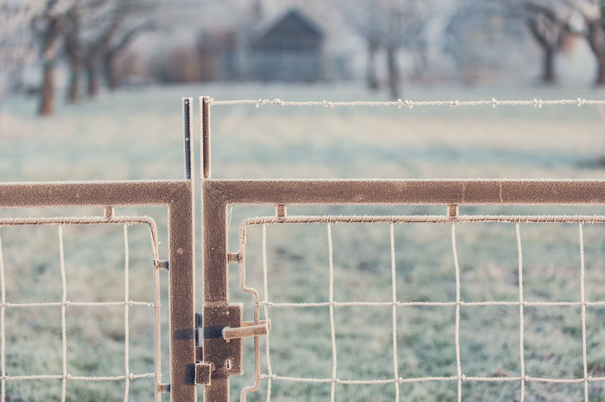 Focus On Foreground Day Security Fence Metal Protection Boundary Barrier Safety No People Nature Outdoors Built Structure Architecture Close-up Rusty Water Plant Railing Land White Frost