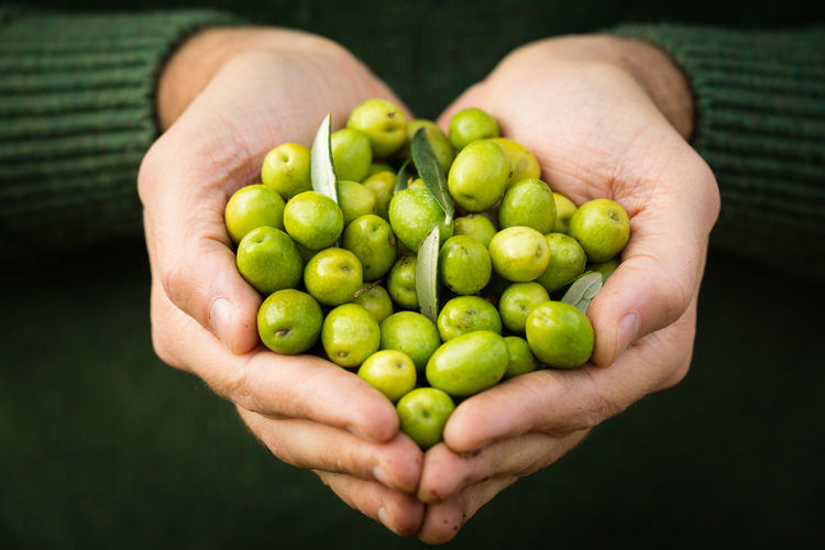 Cropped image of person holding fruits