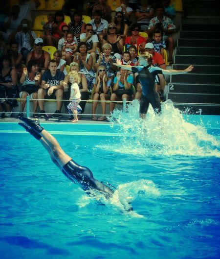 Everyday Joy Acuatic Park Water Show