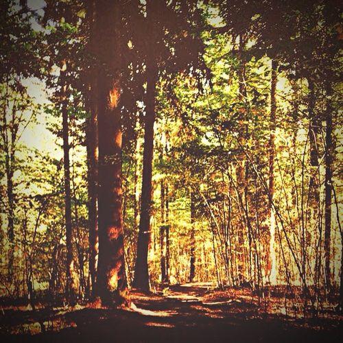 Forest Woods Trees Green Light Summer Wald Nature Bäume Natur