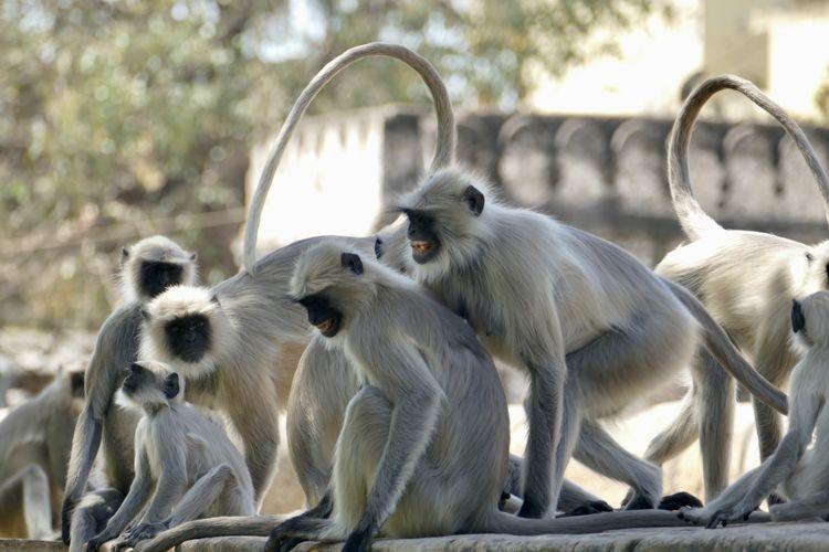 View of a monkey