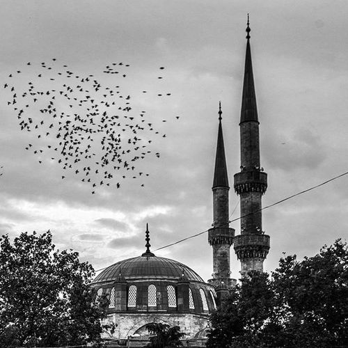 """Bazen profesyonel olmak gerekmez anı yakalamak için. Şükürler olsun ki ben de o anı yaşadım.Tevekkülü elden gözden ve en önemlisi kalpten cikarmamak gerek diye düşünüyorum. Üsküdar Valide-i Cedid Camii 🙏""""Kalpler yalniz Allah icin atar""""🙏 Istanbulcity Izkiz DeluxeFX Istanbuldayasam Fotografheryerde Instagramturkey Gununkaresi Zamanidurdur Allshotsturkey Photo_turkey Hayatakarken Anlatistanbul 1dakika Gulumseaska Instasyon Fotografvakti Istanbulturkiye .tr ONCUFOTO Aniyakala Ahguzelistanbul Fotografdukkanim Sizinkareleriniz Fotogulumse Ahguzelistanbul Fotozamani turkobjektif istanbulpage anilarinisakla LOVE"""