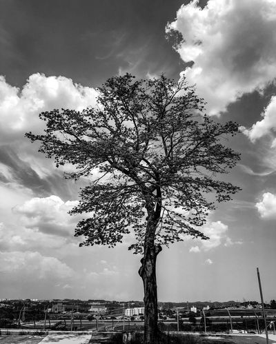 The tree Tree Sky Cloud - Sky Branch Outdoors Day Building Exterior Nature No People Sunlight Growth Beauty In Nature City Cityscape Architecture Built Structure Flower