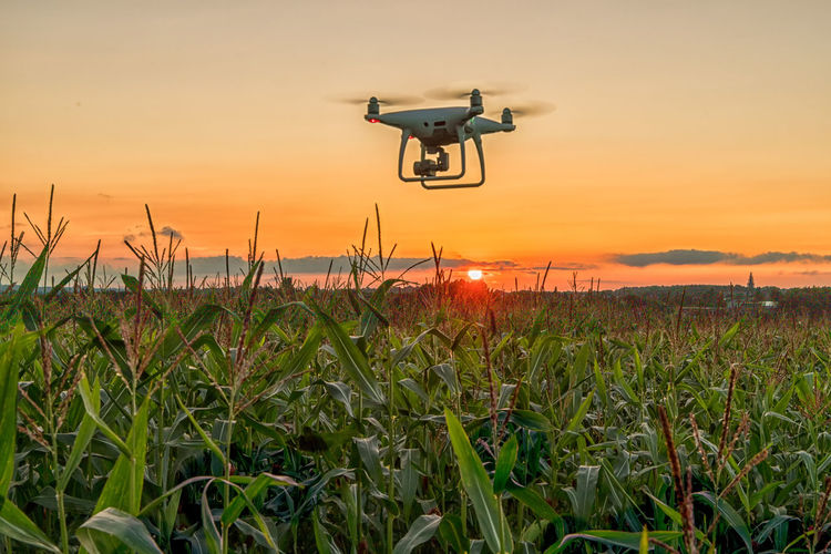 down on the farm, corn fields Cornfields Drone  Orange Sky Quadcopter Agriculture Beauty In Nature Camera - Photographic Equipment Corn Drone  Drone Camera Drone Photography Droneshot Droneview Farming Field Flying Flying In The Sky Growth Land Landscape Mid-air Nature No People Orange Color Outdoors Plant Rural Scene Scenics - Nature Sky Sunset Sunset #sun #clouds #skylovers #sky #nature #beautifulinnature #naturalbeauty #photography #landscape Technology Transportation Uav Photography