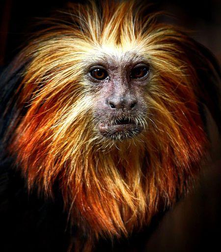 Monkey Nature