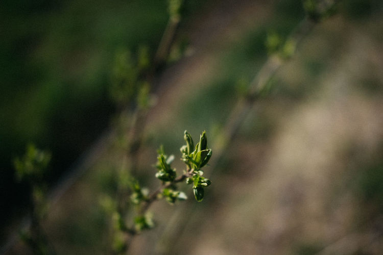 Close-up of small plant
