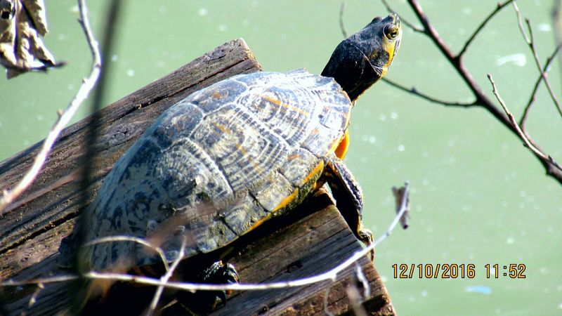 Tortoise Shell Animals In The Wild Animal Wildlife Close-up Tortoise Outdoors Focus On Foreground Turtle 🐢 Taking Sun