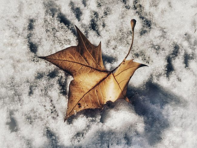Leaf Change Autumn Dry Maple Leaf Close-up Maple Nature Fragility Day Outdoors No People Beauty In Nature Capturemoment Somosfelices Snowing Nature White Color Cold Temperature Taking Photos Autumn Autumn Leaves Autumn Colors Autumn🍁🍁🍁 Low Angle View