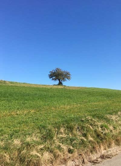 Clear Sky Field Landscape Tranquil Scene Nature Tree Growth Sky Outdoors Grass Copy Space Blue Scenics
