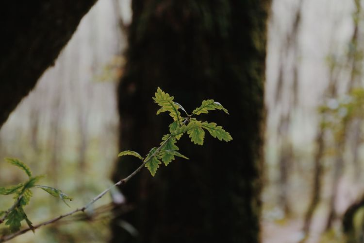 Close-up of leaves on tree trunk