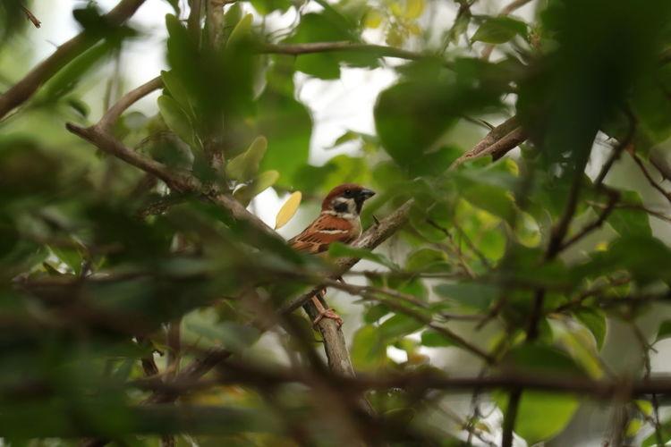 birding Bird