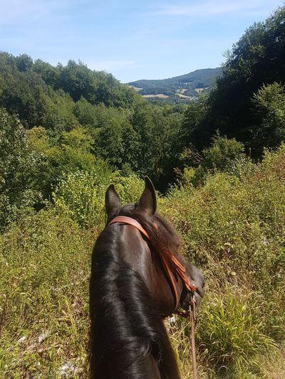view Blicke.  Morgan Horse Odenwald...... Summer Ausblick Tree Sky Close-up Horseback Riding Horse Racing Pony Working Animal
